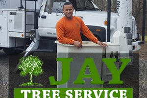 Jay Tree Service Featured Image
