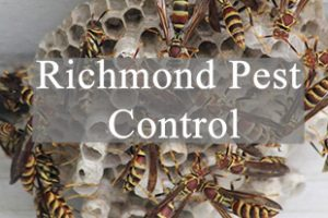 Richmond Pest Control Featured Image